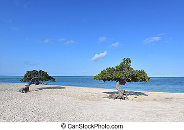 αετός , divi , δέντρα , ακτή , κατά μήκος , παραλία