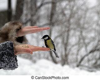 αιγίθαλος , πουλί , μέσα , χέρι