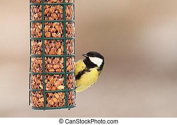 αιγίθαλος , πουλί , σπουδαίος , πεινασμένος , τροφοδότης