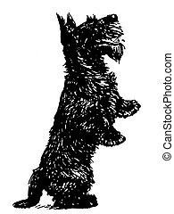 ακάθιστος , θηλειά έδαφος , εκδοχή , μαύρο , σκωτσέζικο , άσπρο , γάμπα , είδος μικρού σκύλου , του
