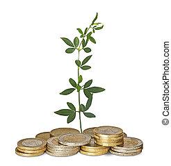 ακμάζω , κέρματα , νεαρό φυτό