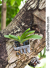 ακμάζω , σπόρος , δέντρο , ορχιδέα