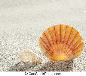 ακρογιαλιά άμμος , όστρακο , τροπικός , τέλειος , ακμή άδεια