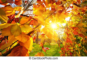 ακτίνα , φθινόπωρο , ήλιοs , φύλλωμα , διαμέσου