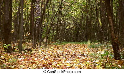αλίσκομαι φύλλο , μέσα , φθινόπωρο , πάρκο