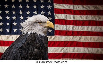 αμερικανός , φαλακρός αετόμορφο αναλόγιο , με , flag.