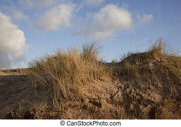 αμμόλοφοι , γαλάζιος ουρανός , συμβία