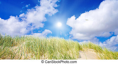 αμμόλοφοι , ειδυλλιακός , ηλιακό φως