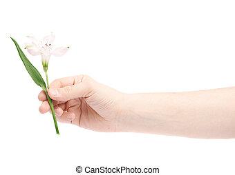 ανάμιξη αμπάρι , ένα , alstroemeria , λουλούδι