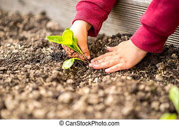 ανάμιξη , μετακινώ , ένα , νέος , πράσινο , νεαρό φυτό