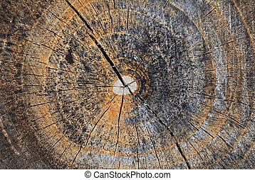 ανάποδος διαίρεση , από , δέντρο