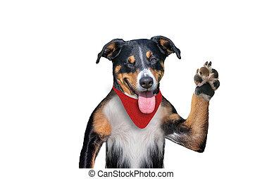 αναβοσβήνω , πέντε , ψηλά , αντίο , σκύλοs , σκύλοs , γειά