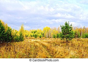 ανανάς , φθινόπωρο αναδασώνω , δρόμοs