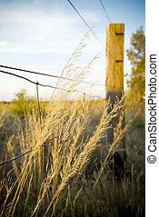 αναστήματος αγρωστίδες , καλλιεργώ , από , κάτω από , ένα ,...