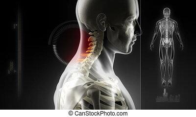 ανθρώπινος , αρθρώσεις , γενική ιδέα , %u2013, περίπατος ,...
