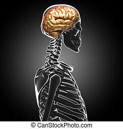 ανθρώπινο όν ανοίγω το κεφάλι