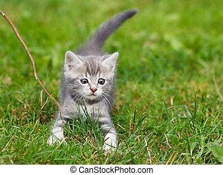 ανιαρός γατάκι