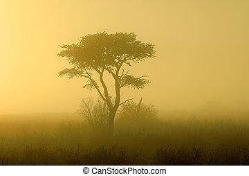 αντάρα , εγκαταλείπω , kalahari , δέντρο , - , ανατολή
