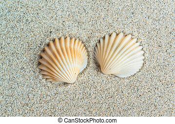 αντικοινωνικότητα , άμμοs , φόντο , θάλασσα