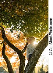 ανώριμος άπειρος , μέσα , ένα , γραφικός , πέφτω , δέντρο