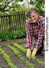 ανώτερος γυναίκα , κηπουρική