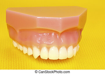 ανώτερος , δόντια