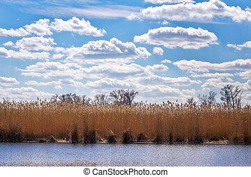 απαντών σε καλαμώνας , επάνω , ο , ακτή , από , ο , λίμνη , και γαλάζιο , συννεφιασμένος , sky., άνοιξη , ανέφελος εικοσιτετράωρο