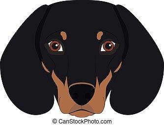 απομονωμένος , εικόνα , σκύλοs , μικροβιοφορέας , φόντο , άσπρο , είδος γερμανικού κυνηγετικού σκύλου