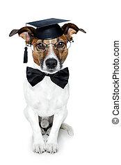 αποφοίτησα , σκύλοs