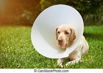 απόστρατος , θέμα , σκύλοs