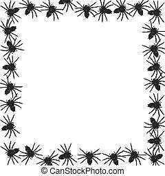 αράχνη , σύνορο
