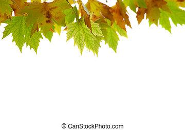 αριστερός , φθινοπωρινός , leaves.