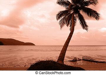 αρπάζω με το χέρι ακρογιαλιά , άμμοs , δέντρο