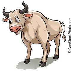 αρσενικό , αγελάδα , εις