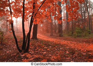 ασαφής , αγχόνη. , φθινόπωρο αναδασώνω , φύλλωμα , κόκκινο