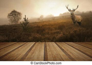 ασαφής , ελάφι , φθινόπωρο , άγαμος άνδρας , τοπίο , w , ομιχλώδης , χαράζω , κόκκινο , δάσοs