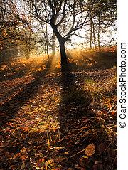 ασαφής , ηλιαχτίδα , φθινόπωρο , διαμέσου , δάσοs , ομιχλώδης , χαράζω , τοπίο