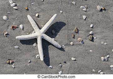 αστέρι , παραλία