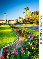 ασχολούμαι με κηπουρική , μέσα , balboa αγρός , san diego , california.