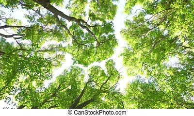 ατενίζω αναμμένος , ανώτατος , από , δέντρα