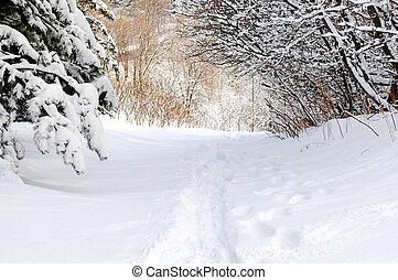 ατραπός , μέσα , χειμώναs , δάσοs