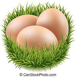 αυγά , θέτω , γρασίδι