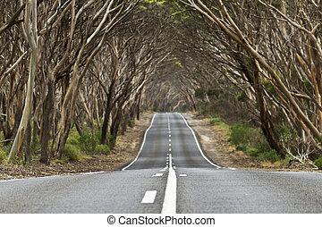 αυστραλός , ταξίδι