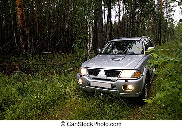 αυτοκίνητο , δάσοs