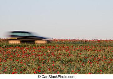 αυτοκίνητο , παπαρούνα , πεδίο , θολός