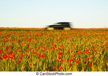 αυτοκίνητο , πεδίο , αφιόνι , οδήγηση