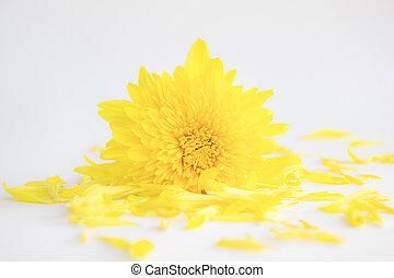 αφαιρώ , λουλούδι , φόντο.