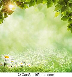 αφαιρώ , φυσικός , φόντο , με , μαργαρίτα , λουλούδια