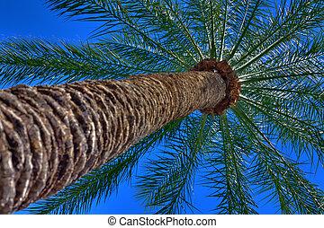 αόρ. του shoot , hdr, φωτογραφία , δέντρο , κάτω από , βάγιο , άποψη