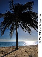 βάγιο , - , ινδική καρύδα αγχόνη , κούβα